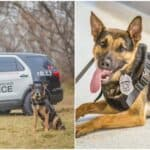 milwaukee police k9